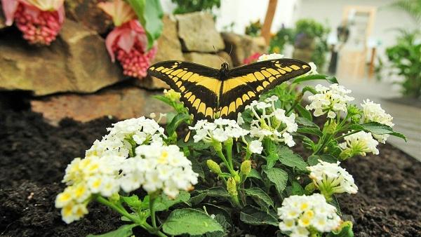 Motýlí dům Diana